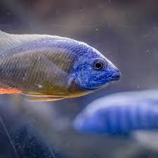 aquarium im wohnzimmer was sie jetzt wissen müssen