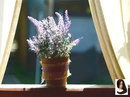 diese pflanzen solltest du im schlafzimmer haben lavendel