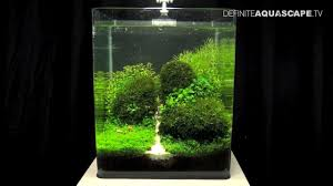 Aquascaping - The Art Of The Planted Aquarium 2013 Nano Pt.1 - YouTube How To Set Up An African Cichlid Tank Step By Guide Youtube Aquascaping The Art Of The Planted Aquarium 2013 Nano Pt1 Best 25 Ideas On Pinterest Httpwwwrebellcomimagesaquascaping 430 Best Freshwater Aqua Scape Images Aquascape Equipment Setup Ideas Cool Up 17 About Fish Process 4ft Cave Ridgeline Aquascape A Planted Tank Hidden Forest New Directly After Setting When Dreams Come True