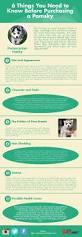 Do Pomskies Shed Fur by Die Besten 25 Pomeranian Husky Kaufen Ideen Auf Pinterest
