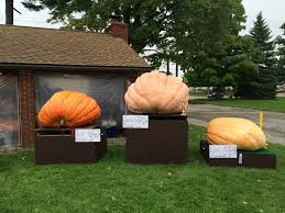 Pumpkin Festival Cleveland Ohio by Pumpkin Festival Welcomes Fall Kick Off Geauga County Maple Leaf