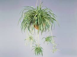 Good Plants For Bathrooms Nz by 37 House Plants Perfect For Terrariums Realestate Com Au