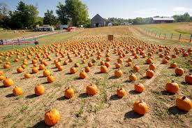 Pumpkin Picking Farms In Maryland by Fall Festival Corn Maze Pumpkin Patch Hayrides Animals Bounce