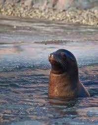 bain de si e froid le bain et les sportifs comment le prendre pour mieux récupérer