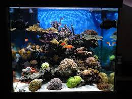 aquarium nano eau de mer le bac de gomegome