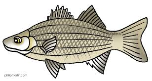 Image Free Bass Fish Clipart Clip Art Black And