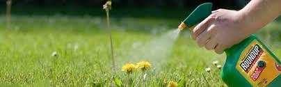 Sprayweeds Roundup Glyphosate Is The Key Ingredient In Monsantos RoundUp Weedkiller