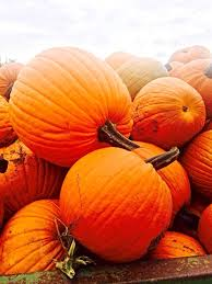 Best Pumpkin Patch Snohomish County by Americas Best Pumpkin Patches Assiter Punkin Ranch