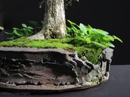 65 best bonsai pots images on pots bonsai and