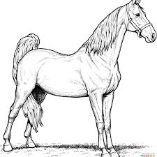 Best Of Horse Coloring Pages Realistic Mare And Foal Design Free Adult Colouring Beautiful Kids 1224