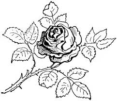 Innovative Roses Coloring Pages With Many Leaf