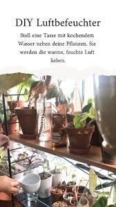 diy luftbefeuchter so wachsen deine pflanzen schnell plants room with plants plant goals
