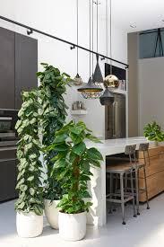 hochgewachsene efeututen als stilelement in moderner küche