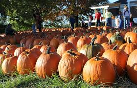 Pumpkin Patch Nashville Area by Area Farms Feature Pumpkins A Hayride And A Zoo Clarksvillenow Com