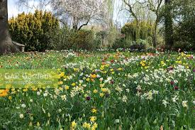 gap gardens a colourful naturalised meadow of tulip and