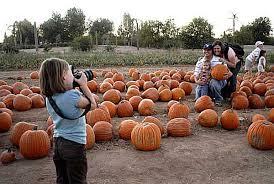 Old Mcdonalds Farm Pumpkin Patch Scottsdale by Phoenix Photos Halloween Pumpkin Patches And Festivals