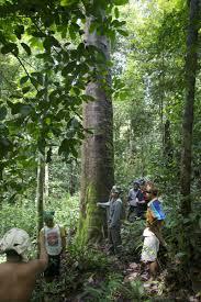 100 Ta E Pernyataan Masyarakat Dayak Muara E Mempertahankan Hutan Mereka