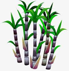 Sugar Cane Clipart Food PNG Image And