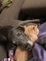 Loss And Grieving | Owyheestar Weimaraner's News Akc Reunite Home Facebook Npr Shop Promo Code Free Shipping Sheboygan Sun 613 Pages 1 32 Text Version Fliphtml5 Uldaseethatiktk Urlscanio Pet Microchip Scanner Universal Handheld Animal Chip Reader Portable Rfid Supports For Iso 411785 Fdxb And Id64 Chewycom Coupon Codes Door Heat Stopper Giant Bicycles Com Fitness Zone Bred With Heart Faqs Owyheestar Weimaraners News Pizza Hut Big Dinner Box Enterprise 20 Aaa