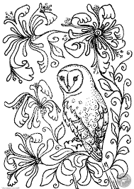 Barn Owl And Flowers Colouring Page