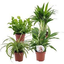 4er set luftreinigende zimmerpflanzen vier grünpflanzen