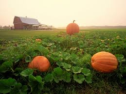 Best Pumpkin Farms In Maryland by 183 Best Maryland Images On Pinterest Ocean City Md Maryland