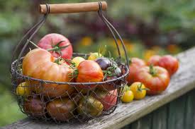 How To Grow Tomatoes From Seeds - Best Tomato Growing Tips Sweet Tomatoes The Boston Lunch Lady Amazoncom Drunken 2 Pack Grocery Gourmet Food Hot Dog Of A Food Truck Pays Off For Monroe Fatherson Duo Michigan 6 Varties To Try A Healthier Chesas Gluten Tootin Free Truck Chicago Trucks Celebrity Tomato Prized Flavor And Large Fruit Kitchensurfing Blog Yellow Stock Photos Images Alamy Quebec Citys 5 Favorite Keep Exploring Oath Pizza Roaming Hunger