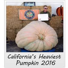 Pumpkin Picking Lancaster County Pa by How Do Lancaster County U0027s Great Pumpkins Rate In The World Of