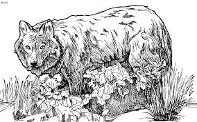 Grey Wolf Coloring Pages 15 Gray Page Online