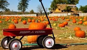 Pumpkin Patch Farm Temecula by 10 Pumpkin Patches And Farms In San Diego La Jolla Blue Book Blog