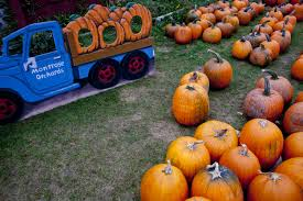 Pumpkin Farms In Flint Michigan by In The News Montrose Orchards