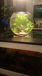 bocaux poissons bocal