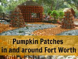 Real Pumpkin Patch Dfw by Pumpkin Patches In And Around Fort Worth Fall Pinterest