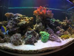 A Guide To Building And Caring For A Natural Reef Aquarium. 75 Gallon Tank Aquascape Ideas Please Reef Central Online Community Minimalist Aquascaping Page 3 2reef Saltwater And How To A Aquarium Youtube Tank Rockscape To Drill Cement Your Live Rock Gmacreef Columns In A Saltwater Callorecom Pieter Van Suijlekoms Revisited Is There Science Live Rock Sanctuary The Why I Involuntarily Redid My Mr 7