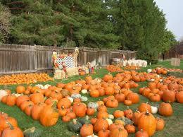 Colorado Pumpkin Patch Farm Camp by Best 25 Pumpkin Patch Denver Ideas On Pinterest Local Pumpkin