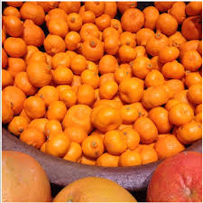 Kernel Toms Pumpkin Patch Moorpark Ca by Kishu Tangerines Information And Facts