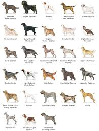 Dog Breeds That Dont Shed List by 14 Dogs That Dont Shed Or Grow Cute Dog Breeds That Don T