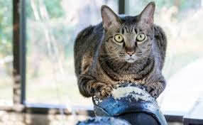 cat sofa stop your cat from scratching sofas care2 healthy living