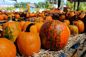 Pumpkin Patch Milwaukee by Pick Out Your Pumpkin At The Heritage Park Pumpkin Patch In La