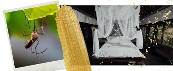 bester mückenschutz auf reisen und zuhause effektive produkte