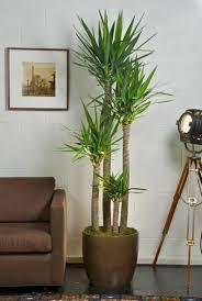 grünpflanzen bestimmen ihr ambiente dekorieren sie mit