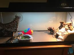 Bearded Dragon Heat Lamp Broke by New Juv Beardie Living Without Uvb But Healthy U2022 Bearded