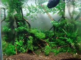 Low Tech Tank Show-and-Tell (low Tech Can Be Lush, Too! =) - The ... Httpwwwaquariuesigngroupcomdataphotos Low Tech Tank Showandtell Low Tech Can Be Lush Too The Aquascaping Styles Aquariums Planted Aquarium And Fish Tanks 101 Best Small Size Images On Pinterest Aquarium Nature Style Aquascape Awards Best Substrate For Betta 268993 Concave Convex Triangular Rectangular Aquascapes Aquascapers With Plastic Plants Only _ Ideas 106 Fluval Edge Inspiration Ohko Stone Forum Art Theories Tips Keeping Basics Love