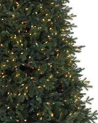 Tree 2 Norway Spruce Narrow Alt