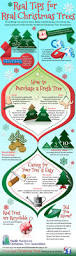 Type Of Christmas Trees by Best 25 Real Christmas Tree Ideas On Pinterest Real Xmas Trees