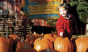 Northern Illinois Pumpkin Patches by Patch Things Up At The Great Pumpkin Patch