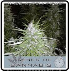 kit chambre culture cannabis kit les meilleures armoires de culture pour le cannabis