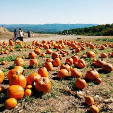 Sunnyside Pumpkin Patch by Lawrence Farms Orchards 184 Photos U0026 79 Reviews Farms 306