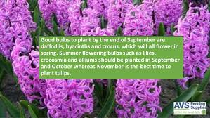 what flowers should you plant in autumn