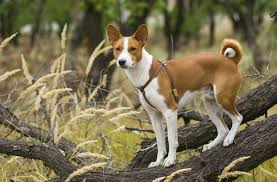 Which Dogs Do Not Shed Or Smell by The Best Dog Breed For Low Shedding U0026 Smell Cuteness